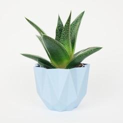 STL Low poly pot / Plant cactus, QBMaker