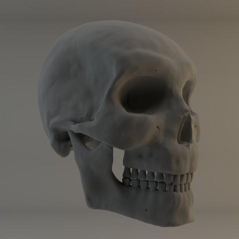 Free 3D printer files Human male skull study, Ben_M