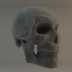 Download free 3D printing files Human male skull study, Ben_M