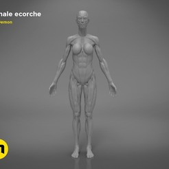 Download STL files Female ecorche, 3D-mon