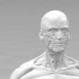 Download 3D printer model Ecorche for printing 3D print model, 3D-mon
