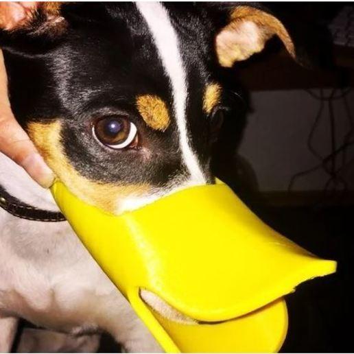 Captura.JPG Télécharger fichier STL gratuit muselière pour chien mignonne en forme de canard • Design à imprimer en 3D, TomasLA
