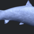 22_TDA0598_Fish_04B06.png Download free STL file  Fish 04 • 3D printable object, GeorgesNikkei