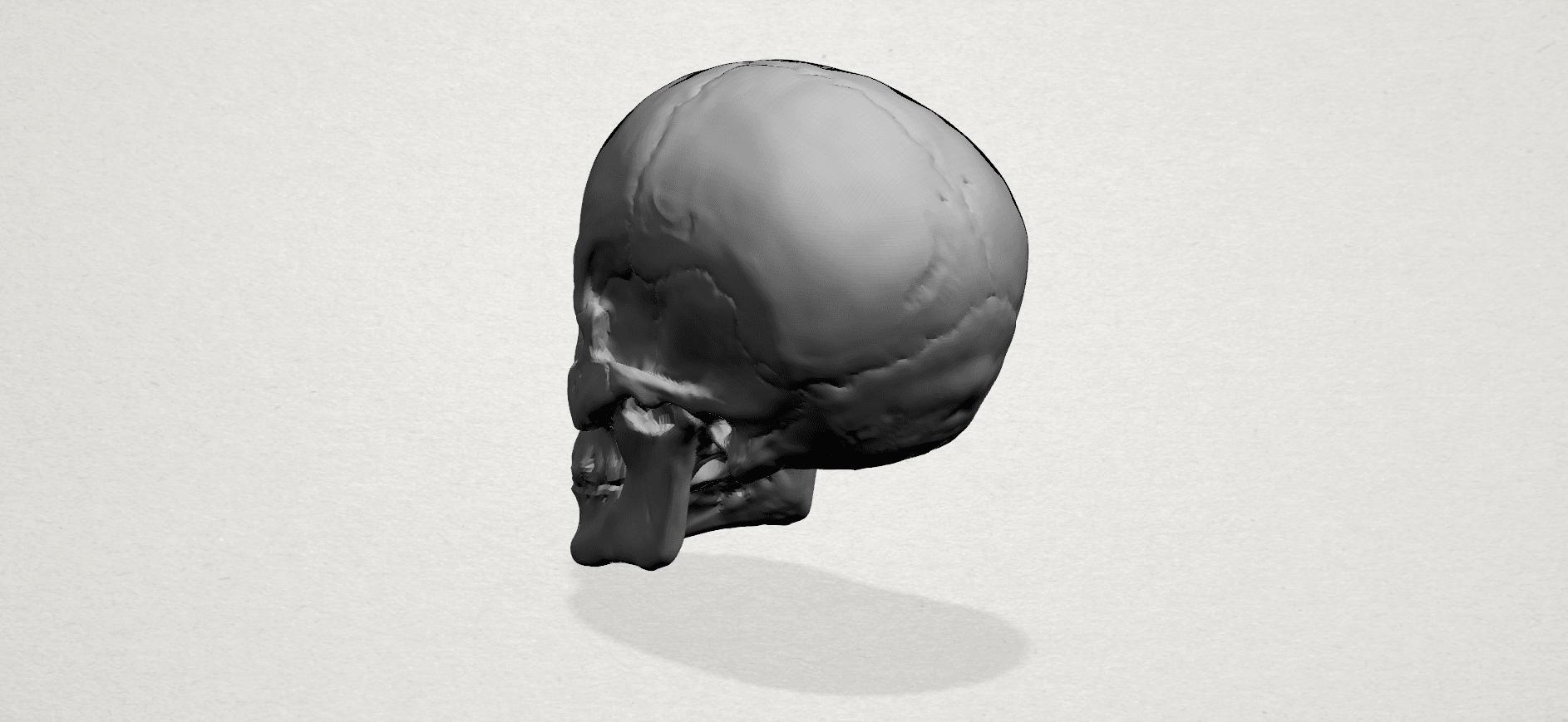 Skull - A03.png Télécharger fichier STL gratuit Crâne 01 • Objet imprimable en 3D, GeorgesNikkei