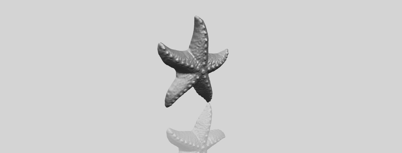 10_TDA0609_Starfish_03A00-1.png Télécharger fichier STL gratuit Étoile de mer 03 • Plan pour imprimante 3D, GeorgesNikkei