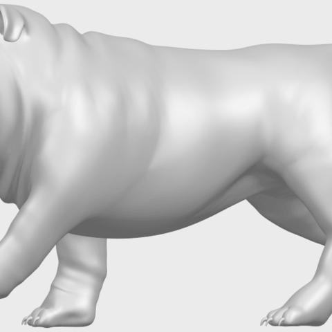 14_TDA0520_Bull_Dog_01A03.png Télécharger fichier STL gratuit Chien de taureau 01 • Plan pour impression 3D, GeorgesNikkei