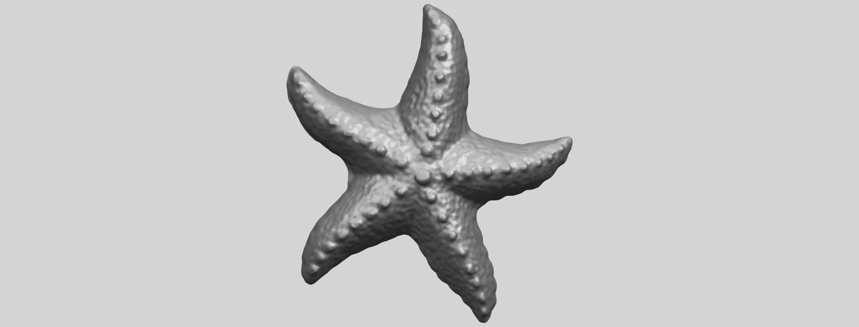 10_TDA0609_Starfish_03A01.png Télécharger fichier STL gratuit Étoile de mer 03 • Plan pour imprimante 3D, GeorgesNikkei
