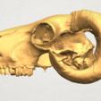 Impresiones 3D gratis Cráneo de Cabra 02, GeorgesNikkei