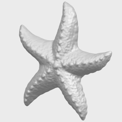 10_TDA0609_Starfish_03A02.png Télécharger fichier STL gratuit Étoile de mer 03 • Plan pour imprimante 3D, GeorgesNikkei