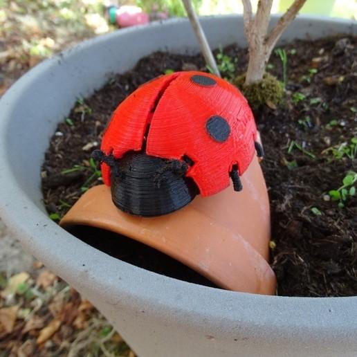 Télécharger plan imprimante 3D gatuit Boîte coccinelle _ Ladybug Box, LaWouattebete