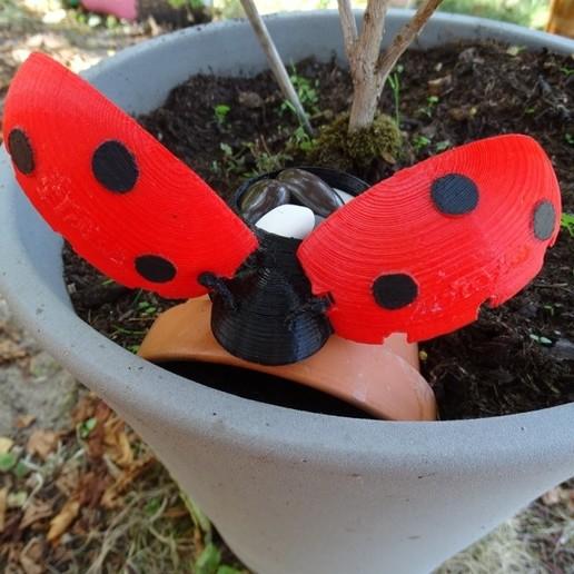 DSC08261.JPG Download free STL file Ladybug Box _ Ladybug Box • 3D printer model, LaWouattebete