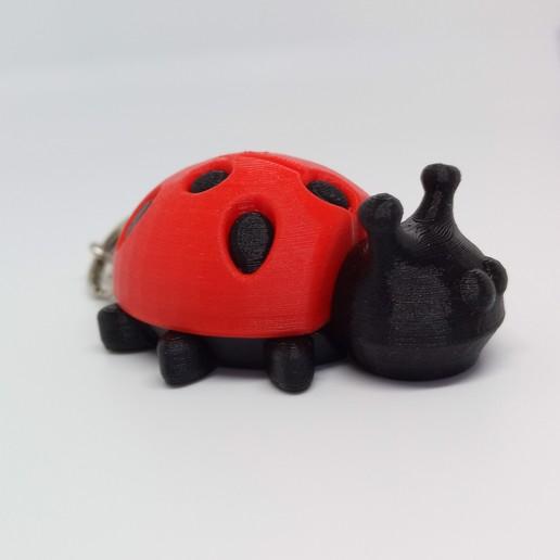 Download STL file COCCINELLE • 3D printer model, PLP