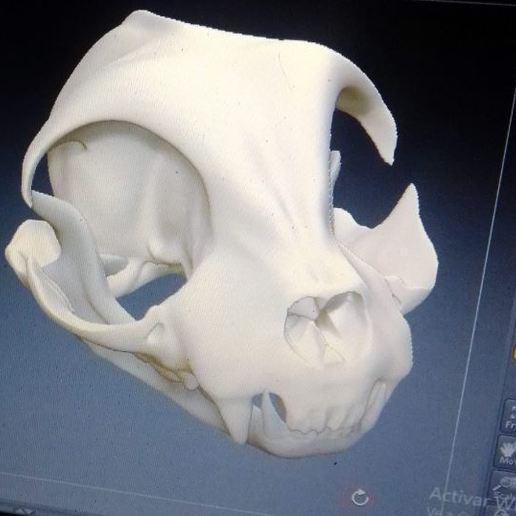 Download STL files cat skull, jozz