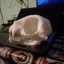 Download STL files cat skull, jozz