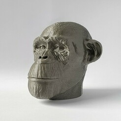 20210106_102507-01.jpeg Download STL file My man the Chimp  • 3D print model, SADDEXdesign
