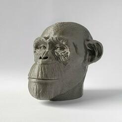 20210106_102507-01.jpeg Télécharger fichier STL Mon homme, le Chimp • Objet imprimable en 3D, SADDEXdesign