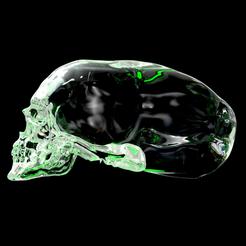 skullInsta1.png Télécharger fichier STL Elongated skull • Objet imprimable en 3D, plasmeo3d