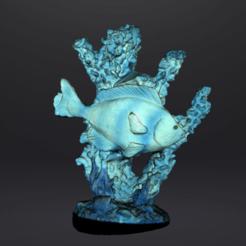 CORAIL TEXT 1.png Télécharger fichier STL Corail et poisson • Objet imprimable en 3D, Motek3D