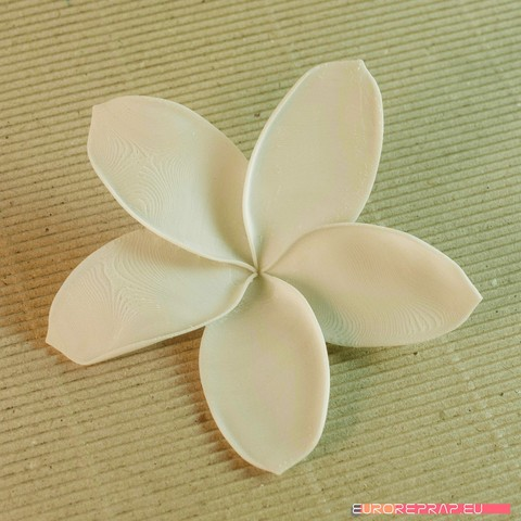 04a.jpg Download STL file flowers: Plumeria - 3D printable model • 3D printable template, euroreprap_eu