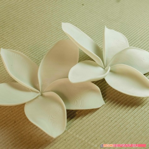 01a.jpg Download STL file flowers: Plumeria - 3D printable model • 3D printable template, euroreprap_eu