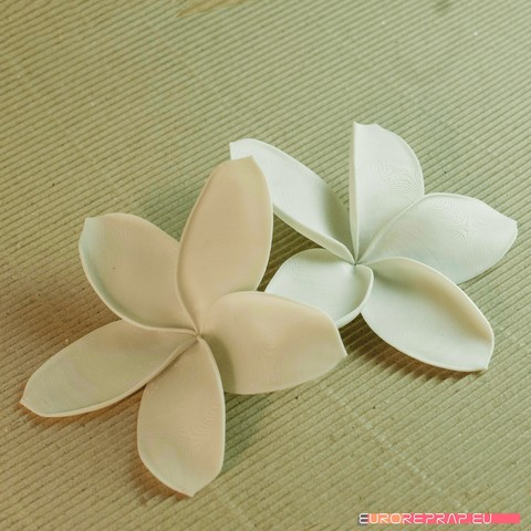 05a.jpg Download STL file flowers: Plumeria - 3D printable model • 3D printable template, euroreprap_eu