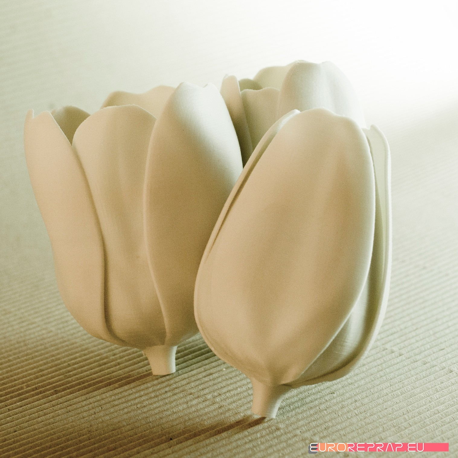 01.jpg Download STL file flowers: Tulip - 3D printable model • 3D printable design, euroreprap_eu