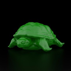 3D printer file Realistic Turtle, siSco