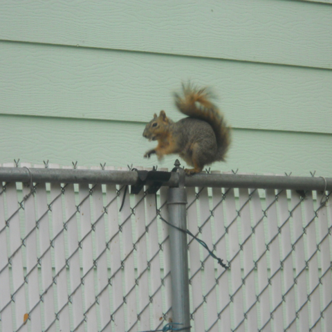 Free stl files Squirrel fence feeder, NohaBody