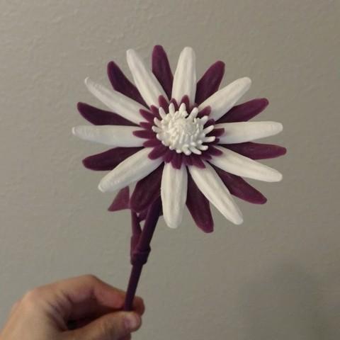 4.jpg Download free STL file Daisy - Flat flower • 3D printable template, mag-net