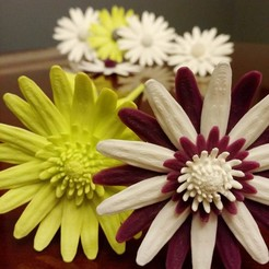 archivos stl Daisy - flor plana gratis, mag-net