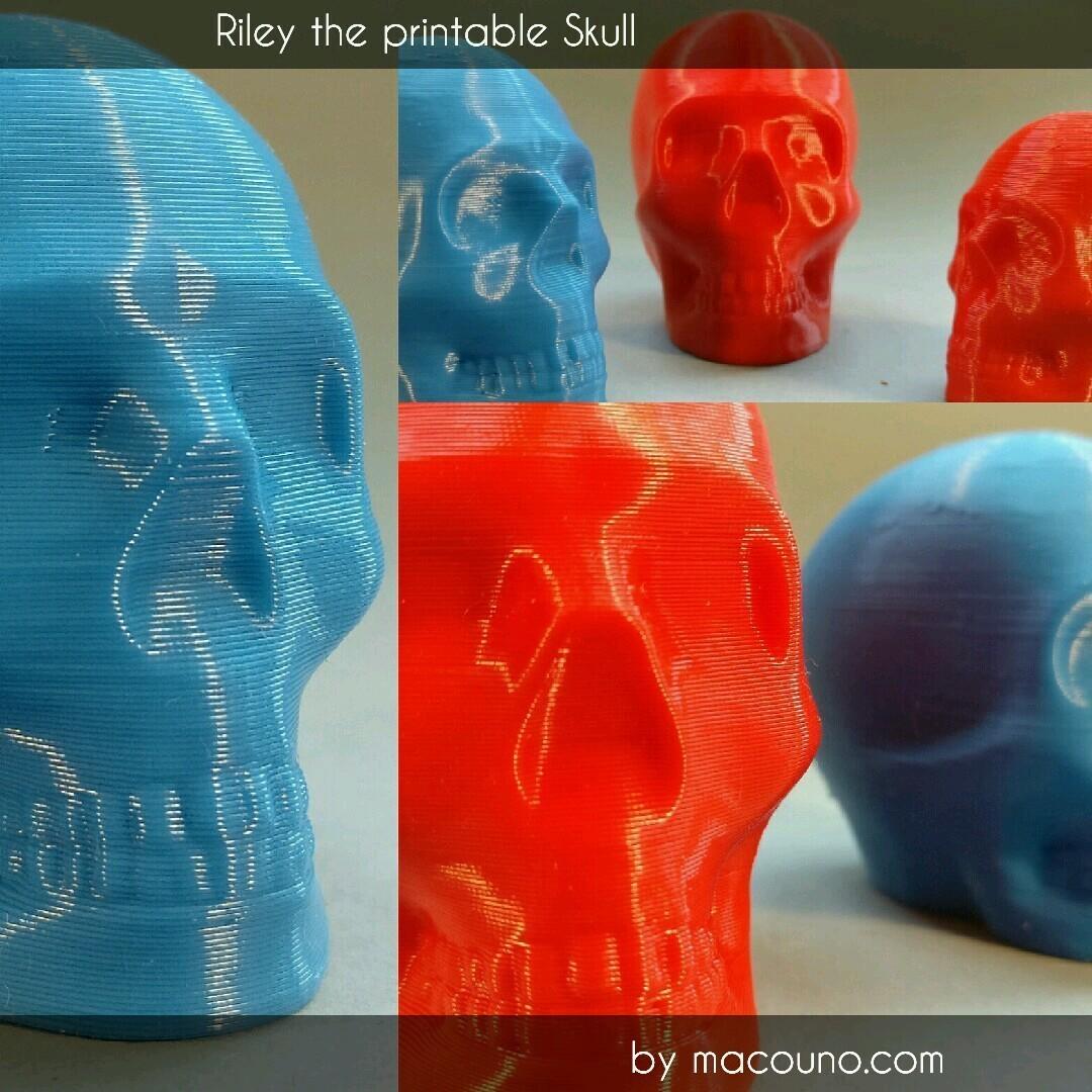 Image-20170110_162210.jpg Télécharger fichier STL gratuit Riley Crâne imprimable • Design pour impression 3D, macouno