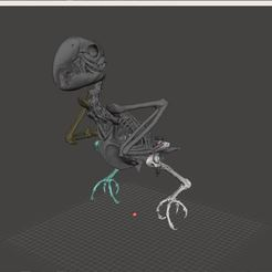 Download STL file Macow Skeleton • 3D printing template, LordLilapause