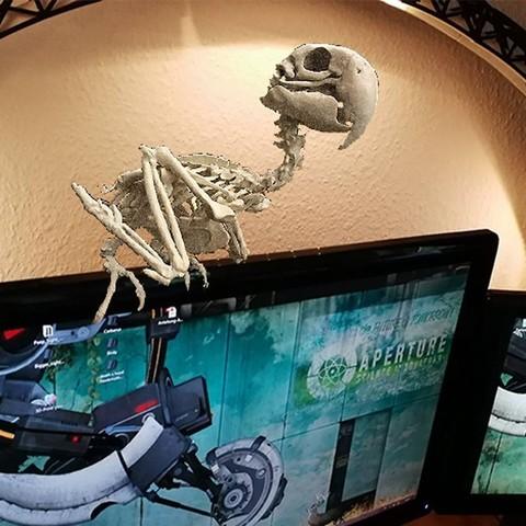 Unbenannt-1.jpg Download STL file Macow Skeleton • 3D printing template, LordLilapause