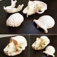 Download free 3D printer designs Ape Skull, LordLilapause