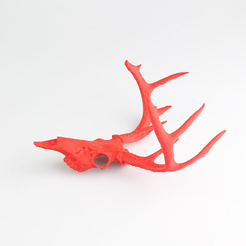Free STL files Deer Skull, LordLilapause