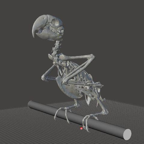 Unbenannt12.JPG Download STL file Macow Skeleton • 3D printing template, LordLilapause