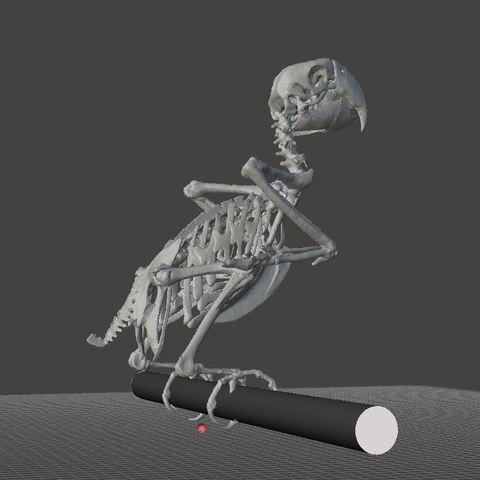 Unbenannt11.JPG Download STL file Macow Skeleton • 3D printing template, LordLilapause