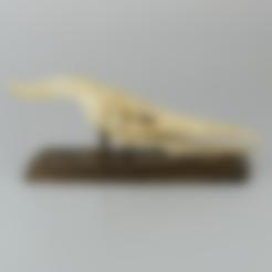 Free STL Flying Dinosaur Skull, LordLilapause