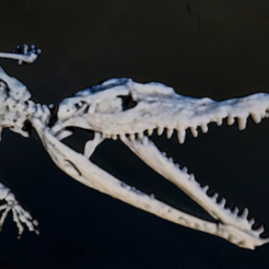 Free 3d print files Crocodylus 3D, 3dlito