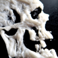 Free 3D printer file 3D skull, 3dlito