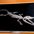 Download free 3D printing templates Crocodylus 3D, 3dlito