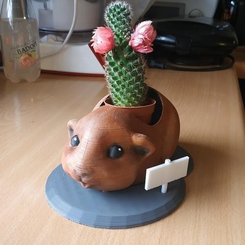 Modelos 3D para imprimir gratis Maceta de cuy - maceta de flores cochon d'inde, Julien_DaCosta