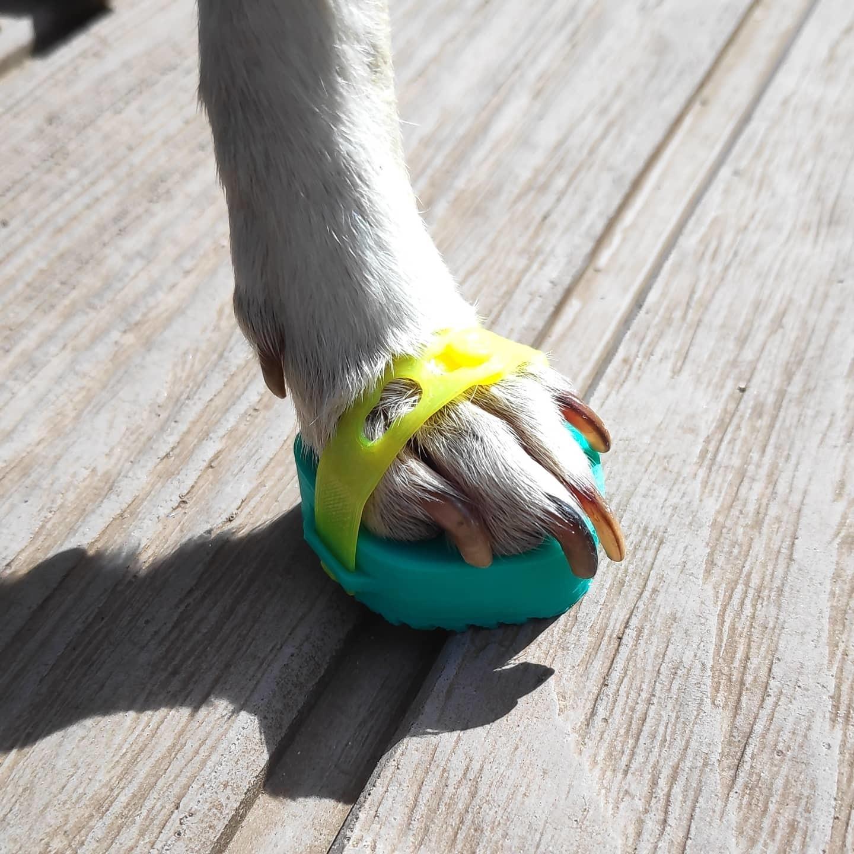 WhatsApp Image 2020-04-28 at 21.48.30 (2).jpeg Télécharger fichier STL gratuit pantoufle pour chien • Plan à imprimer en 3D, PRINTTHINKS