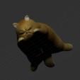 Free STL file Zoo - cat, orangeteacher