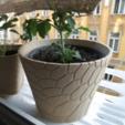 Free 3D printer designs honeycomb planter #2, unwohlpol