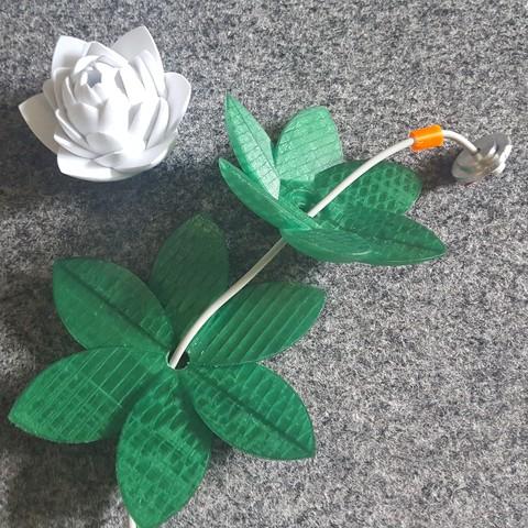 20190703_155515.jpg Download free STL file Lotus Lamp #POLYMAKERCHALLENGE  • 3D print object, Job