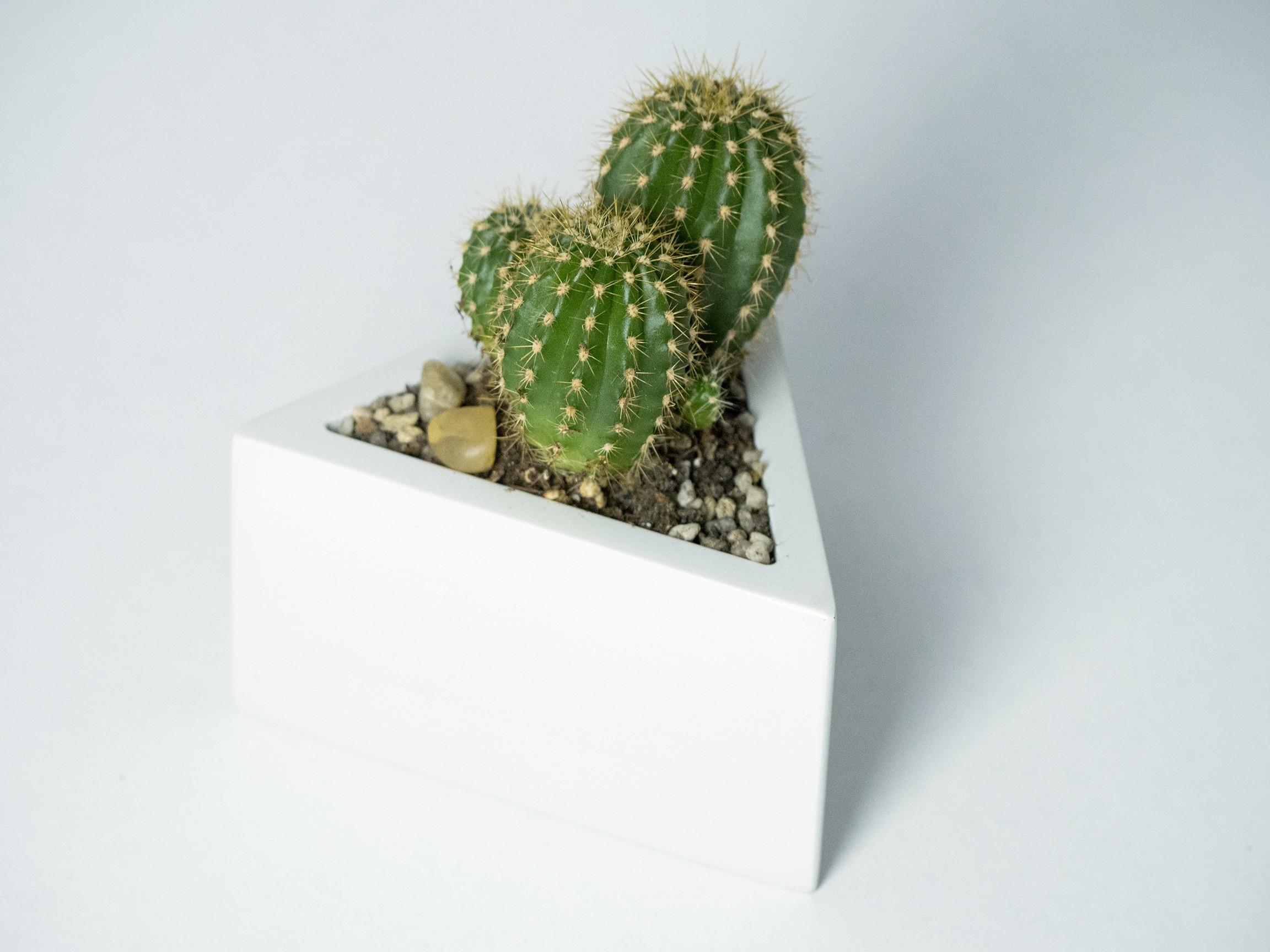 P2090300.jpg Download STL file Prisma planter • 3D print template, atelierro