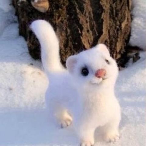 3D model snow white weasel2.jpg Télécharger fichier STL gratuit Belette blanche neige • Plan imprimable en 3D, derailed
