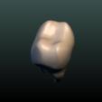 Tooth-05.png Download 3DS file Tooth • 3D printer design, Skazok