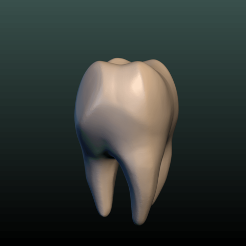 Tooth-04.png Download 3DS file Tooth • 3D printer design, Skazok